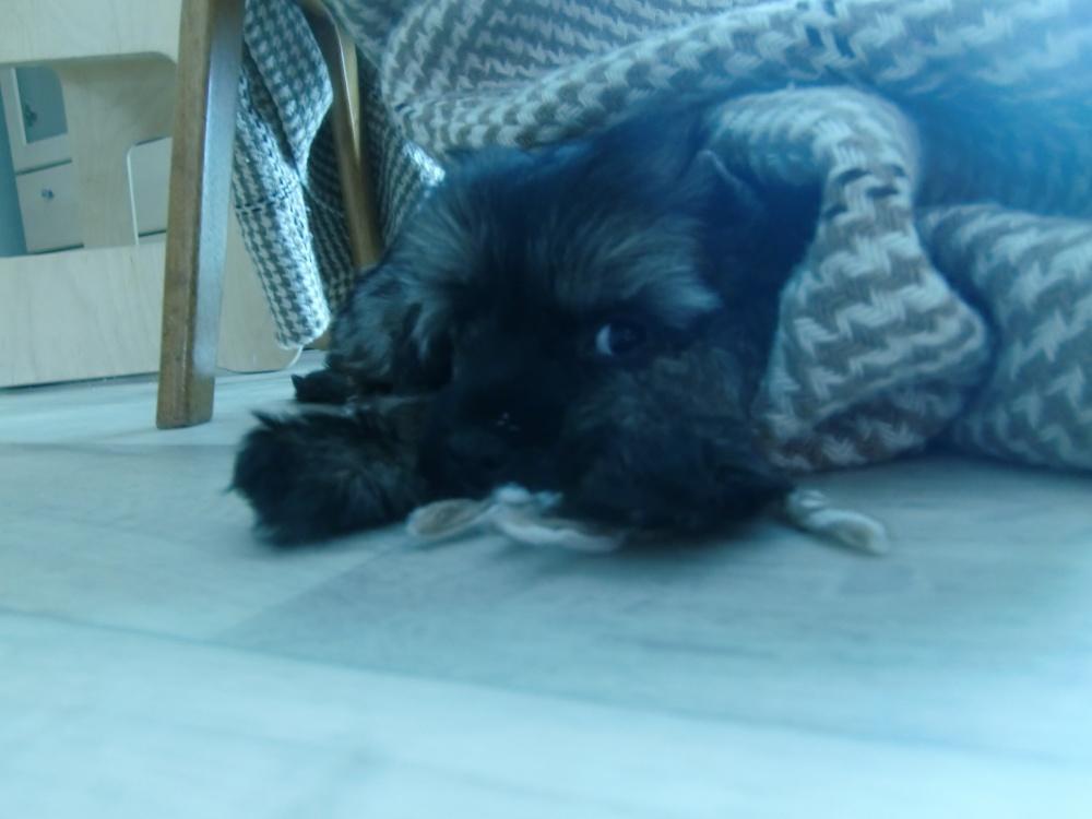 Hunden virker :)